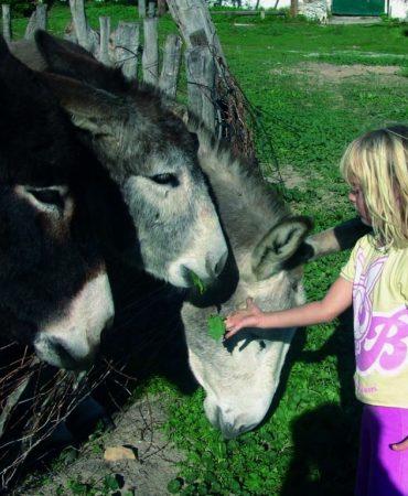 con-burros-1024x835
